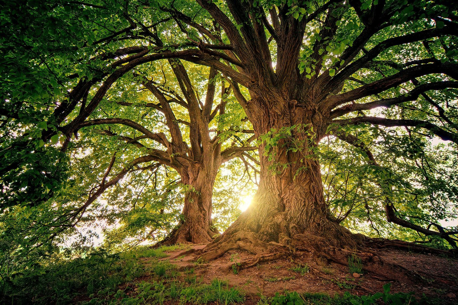 Healing through the energy of trees and plants